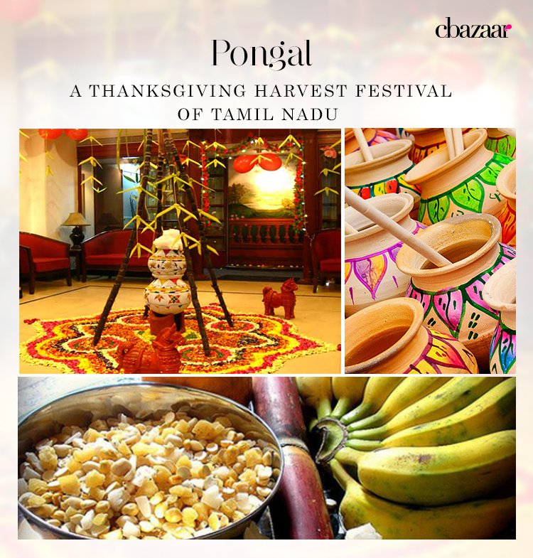 Pongal – A Thanksgiving Harvest Festival of Tamil Nadu